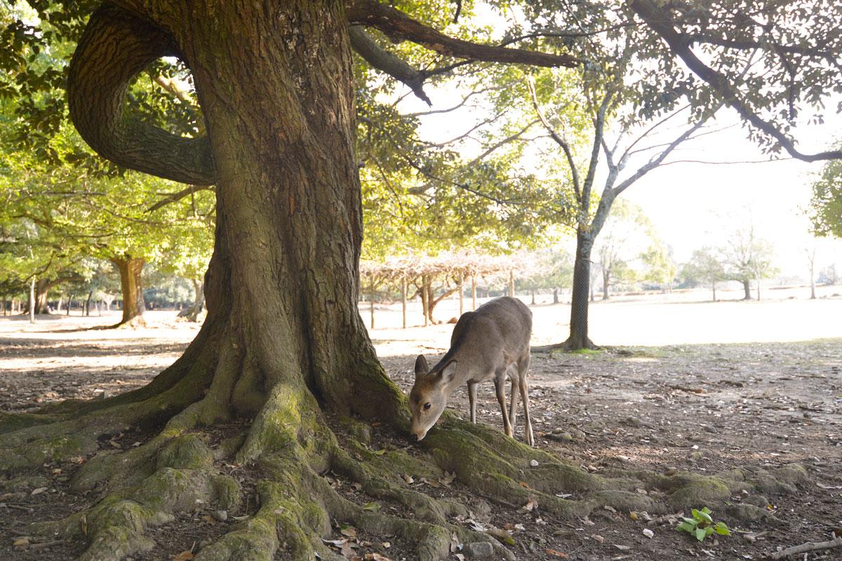 2月12日(月祝)、奈良県文化会館にて古都・奈良の自然、文化遺産を守る勉強会を開催! 参加者募集中です。 |新着情報|奈良公園の環境を守る会・高畑町住民有志の会